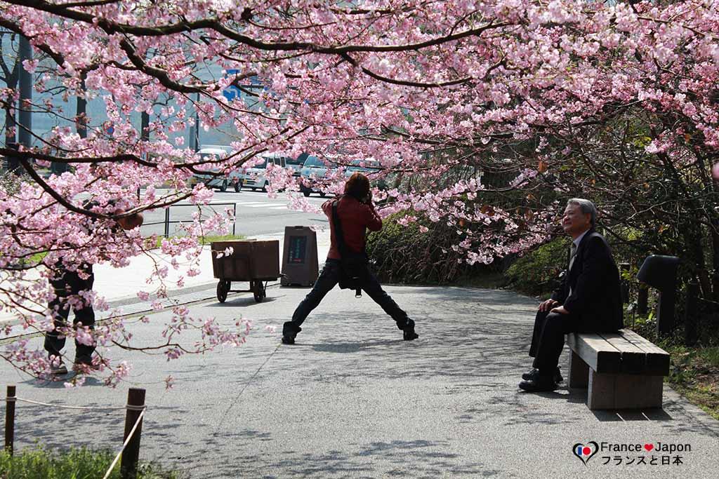 Cerisiers Japonais Hanami Quand Partir Au Japon