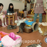 cafe-chat-bar-neko-kohi-4