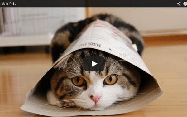 japon maru le chat