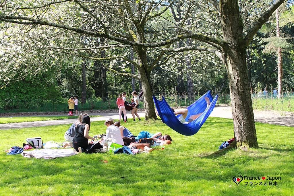 hanami cerisiers en fleur parc de Sceaux