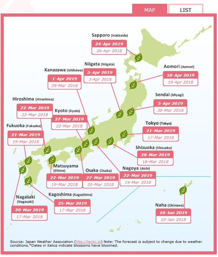hanami voyage japon sakura cerisier en fleur