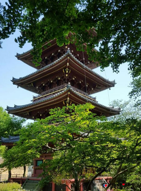voyage japon tokyo visiter zoo ueno