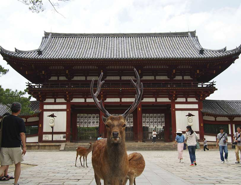japon visiter nara le guide. Black Bedroom Furniture Sets. Home Design Ideas