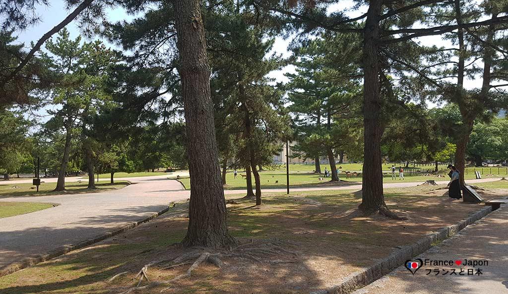 voyage japon nara visiter parc aux daims