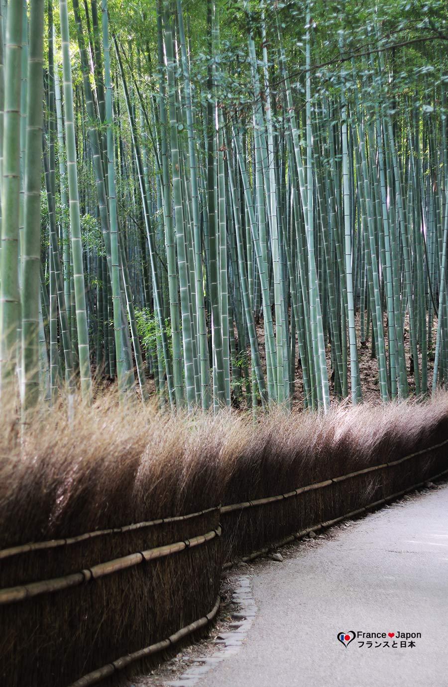 voyage japon visiter la foret bambous arashiyama kyoto