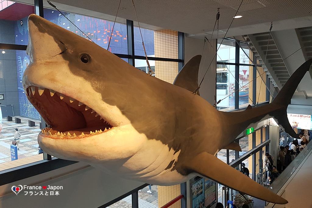 voyage japon visiter aquarium osaka kaiyukan