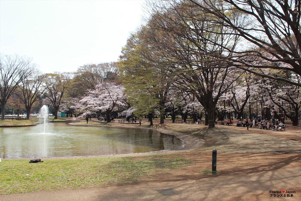 japon tokyo visiter yoyogi park meiji jingu parc Yoyogi