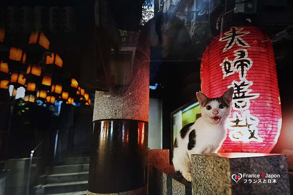 voyage japon osaka visiter le temple hozen dotonbori